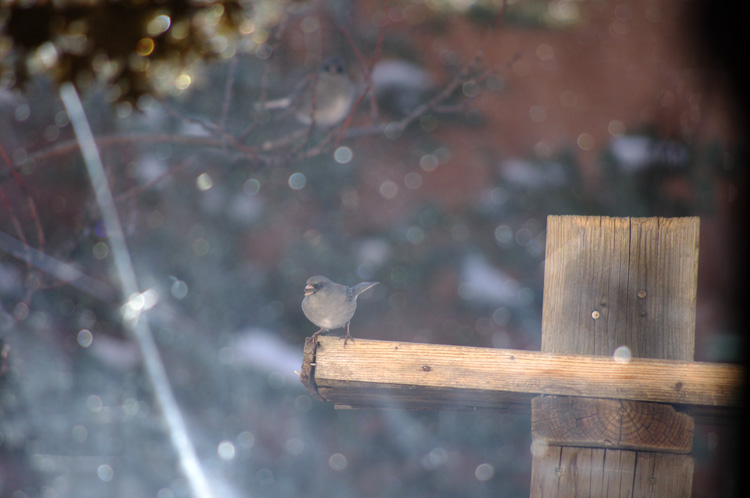 I am Junco!