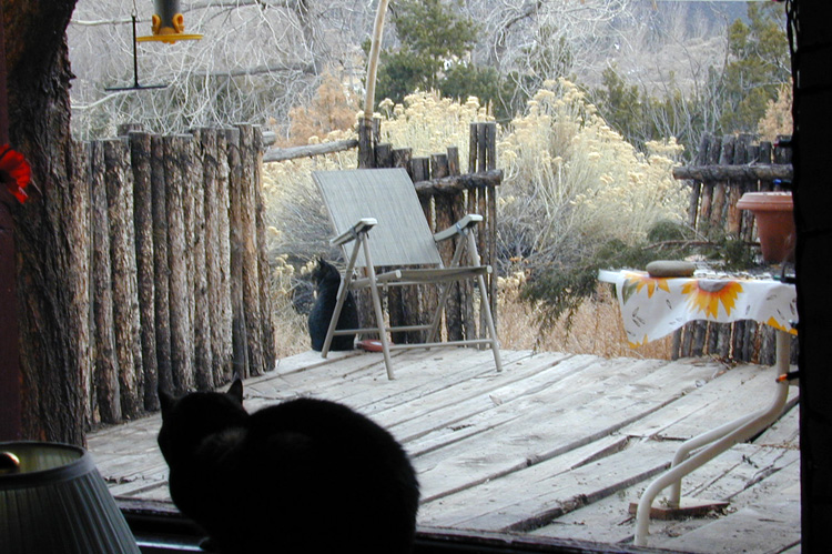 Hobbes looks out the window in Taos, New Mexico in 2004.