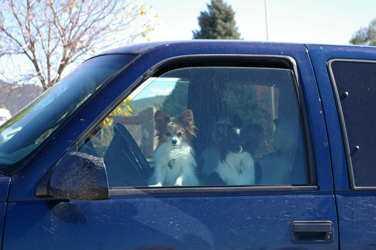 two dogs at Walmart in Taos