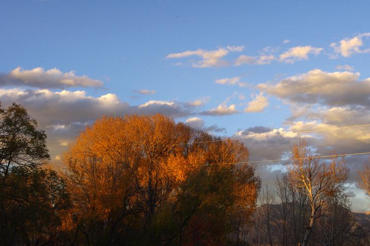 cottonwood at sunset