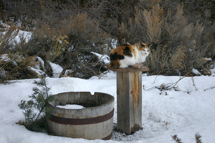 Callie the New Mexico Wonder Cat sits on a bird feeder.