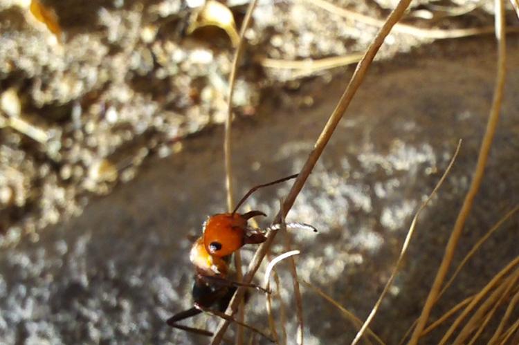 Post image for Ant Spirit