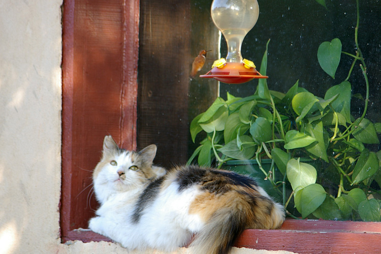 Post image for Cat and Hummingbird