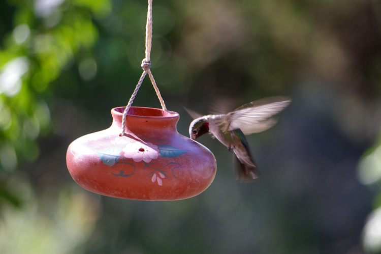 Post image for Small Black-Chinned Hummingbird