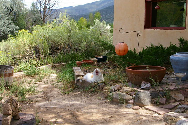 Callie the New Mexico Wonder Cat on a quiet Saturday afternoon in Taos