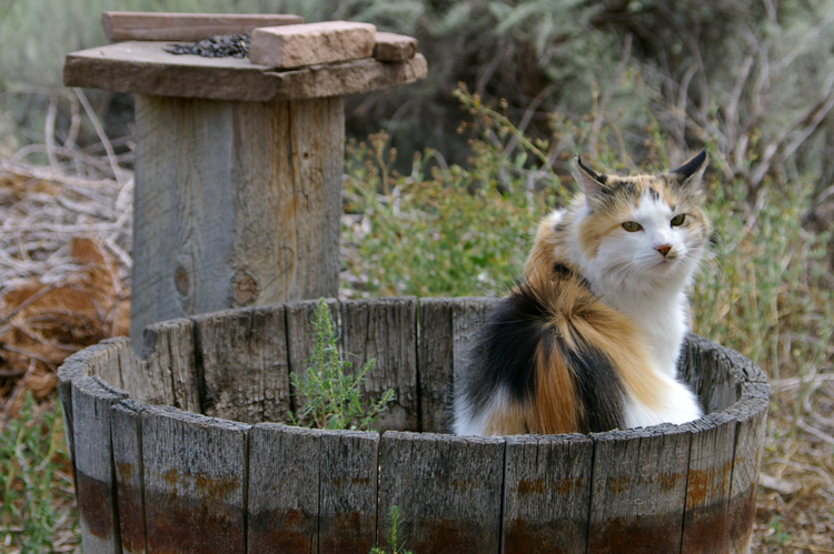 Callie the Wonder Cat lives in Taos, New Mexico, U.S.A.