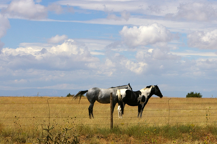 Horses on NM Rt. 104